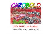 CaroBolo International